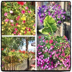 flowers_Fotor
